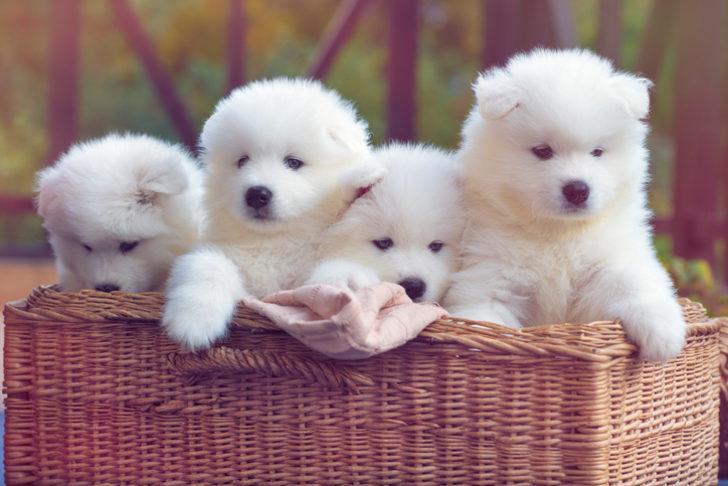 Köpek isimleri dişi ve erkek: Klasik ve modern köpek isimleri