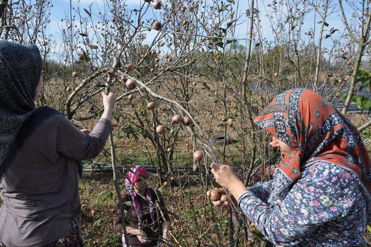 Çiftçi destek ödemeleri 2021: Çiftçiye gübre, mazot, çay, tohum, tarımsal destek ödemesi ne zaman hangi tarihte verilecek?
