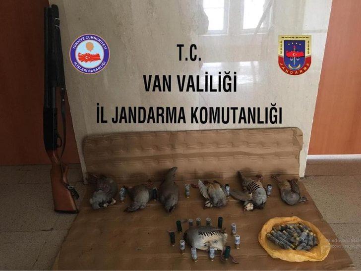 Çatak'ta kaçak avlanmış 7 keklik ele geçirildi