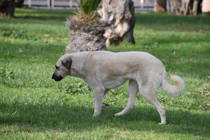 Aliağa'da bin 920 sokak hayvanı tedavi edildi